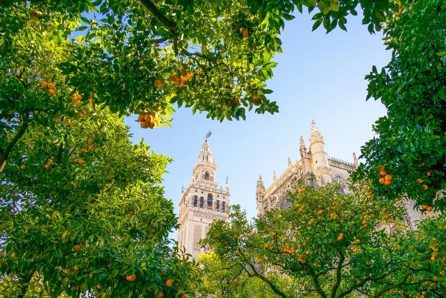 Cathédrale de Séville en Espagne derrière les orangers