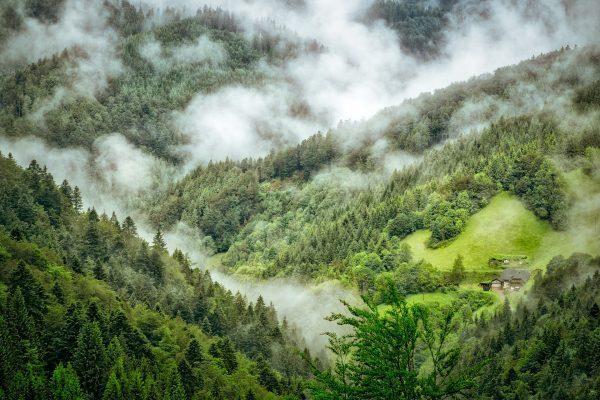 paysage forêt noire